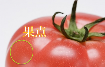 140529-PHY009-tomato-21.36.49